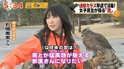 falconergirl