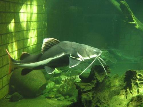 namazu-giant-catfish-myth-japan6