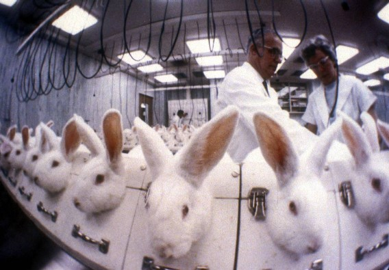 Shiseido-Animal-Testing-Cosmetics