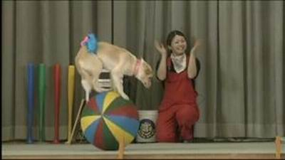 wowow-dog-circus-japan