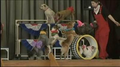 wowow-dog-circus-japan2