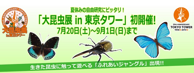 30 insect1