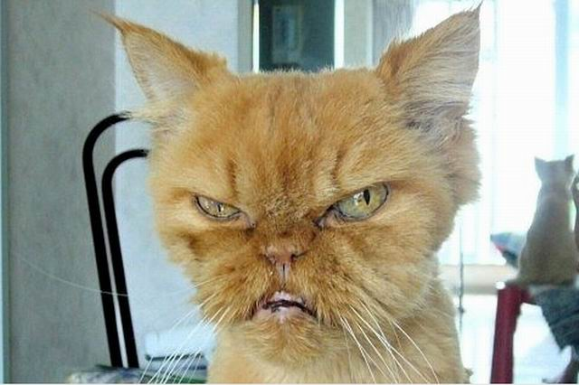 ugly cats (13)