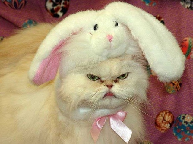 ugly cats (4)
