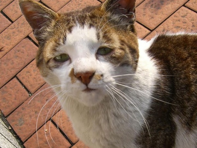 ugly cats (8)