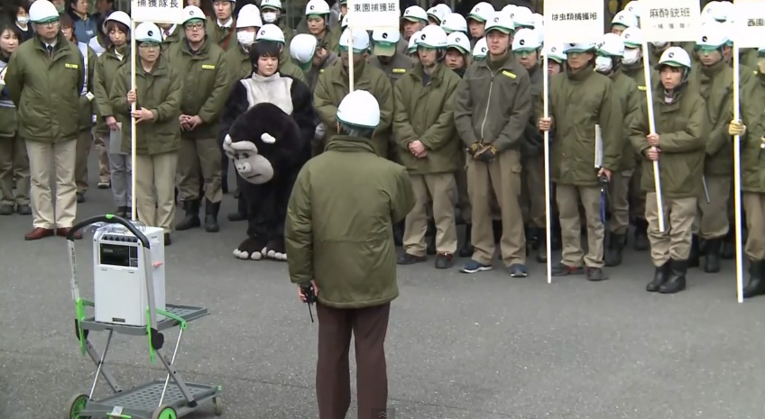Ueno-Zoos-Escaped-Gorilla-Training-Exercise-is-Simply-Adorable-8