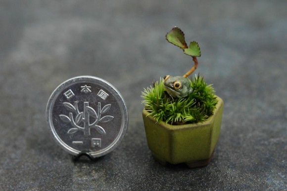 mini bonsai (1)