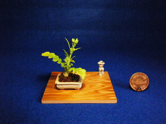 mini bonsai (4)