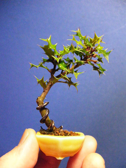 mini bonsai (5)