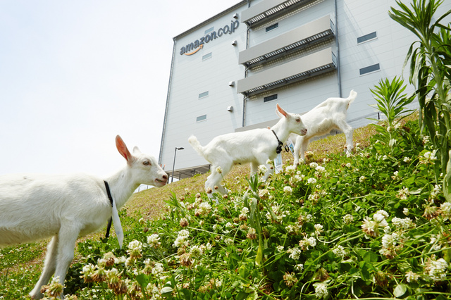 goat-workers-japan-03