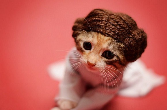 cosplay cats (1)
