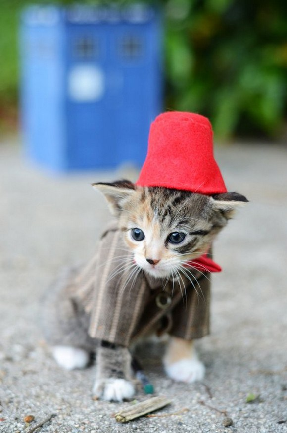 cosplay cats (4)