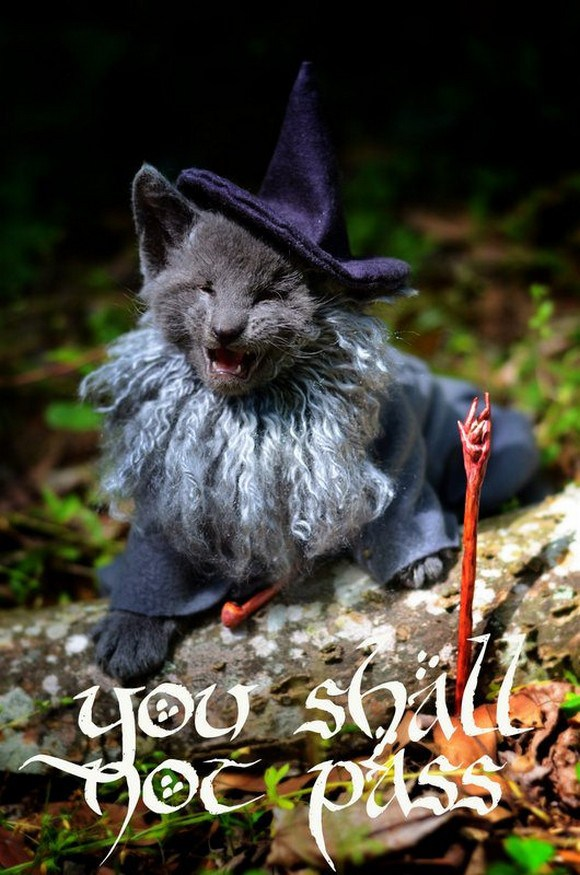 cosplay cats (5)