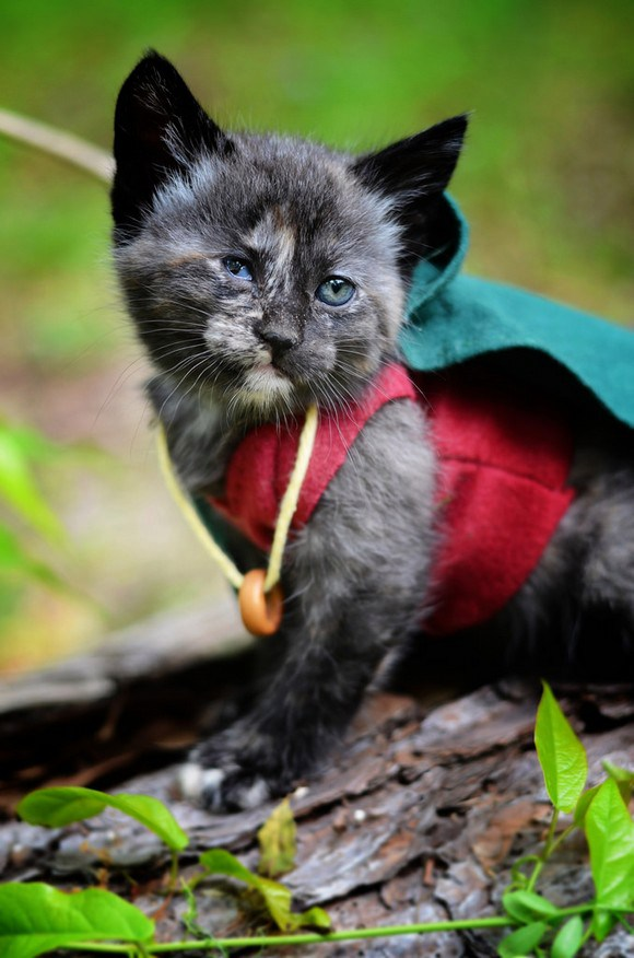 cosplay cats (6)