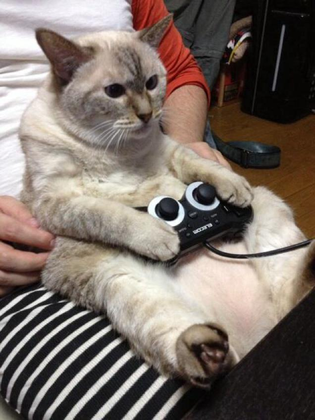 gaming cat (1)