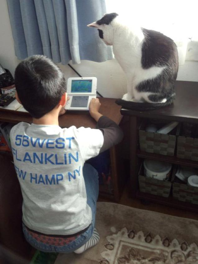gaming cat (12)