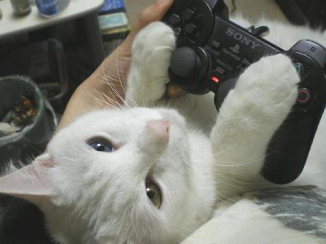 gaming cat (3)