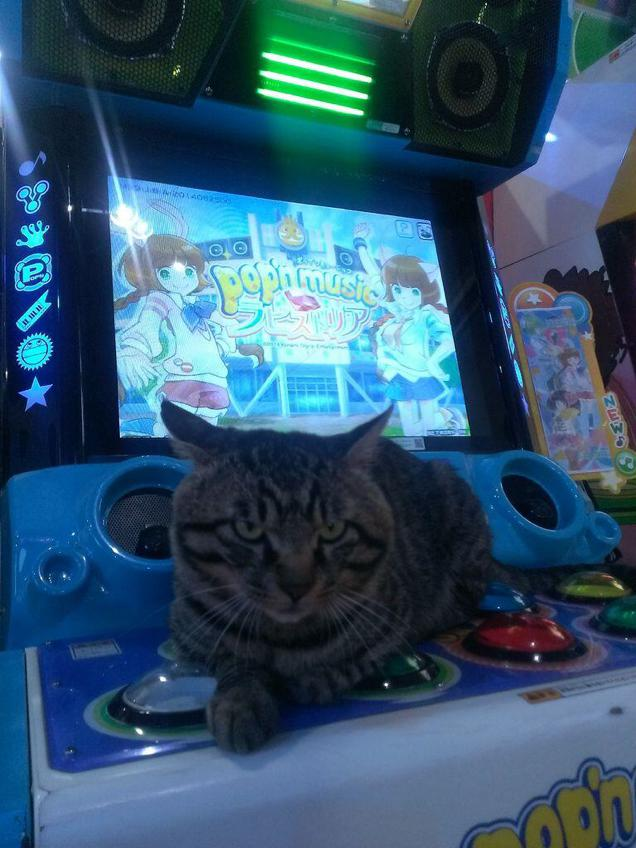 gaming cat (4)