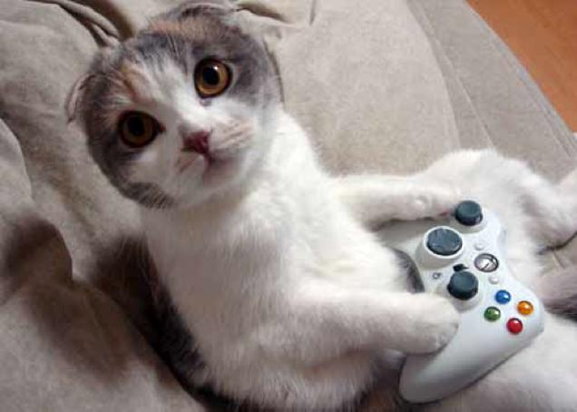 gaming cat (5)