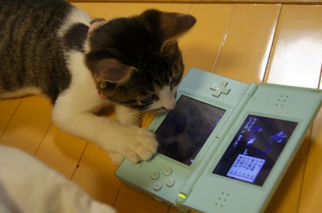 gaming cat (6)