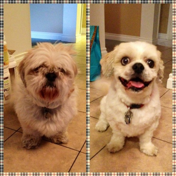 dog haircut (9)