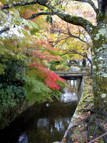 5d autumn-in-kyoto-660