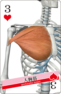 muscle cards (3)