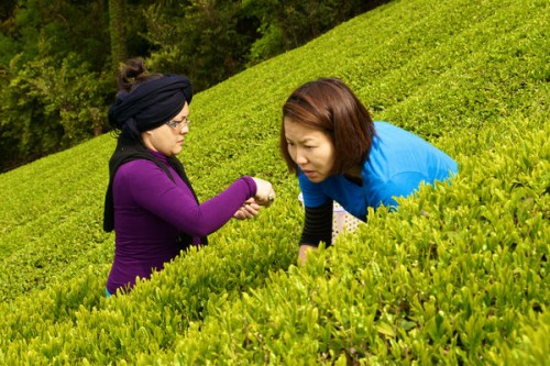 3a tea-picking-activity-52
