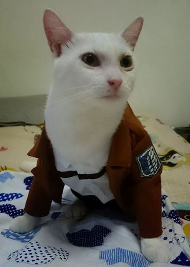 Attack on Titan Kucing Xueyu Taiwan 3