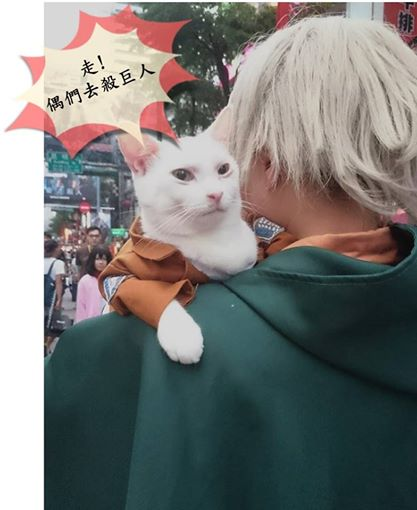 Attack on Titan Kucing Xueyu Taiwan 4