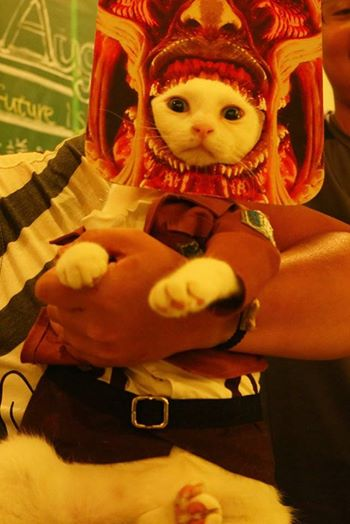 Attack on Titan Kucing Xueyu Taiwan 8