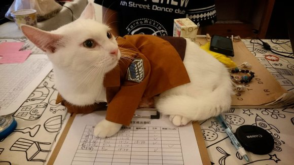 Attack on Titan Kucing Xueyu Taiwan