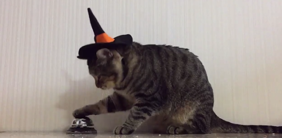 Kucing Trick or Treat Halloween Bel 1