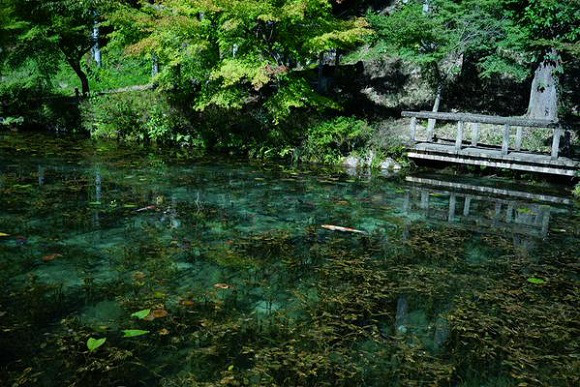 Monet's Pond Gifu 1