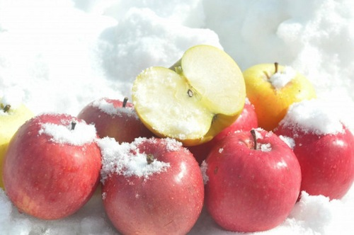 Snow Apples Sayuran Salju 1