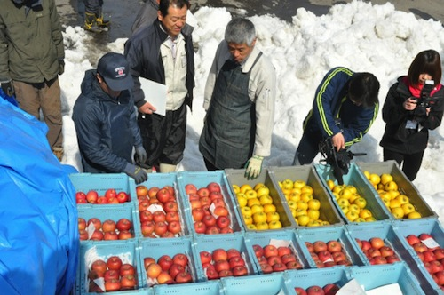 Snow Apples Sayuran Salju 3