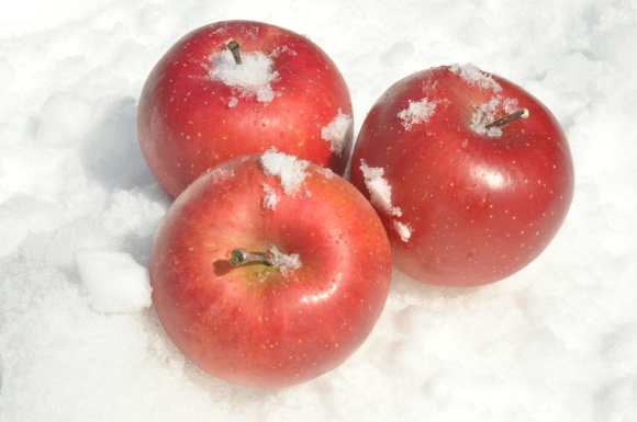 Snow Apples Sayuran Salju