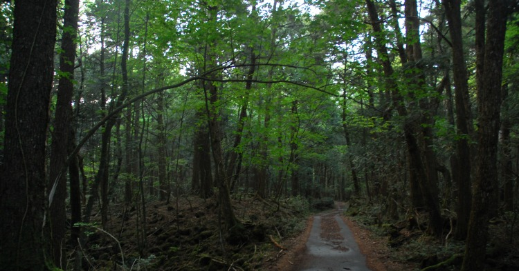 Aokigahara-forest-1-750x393