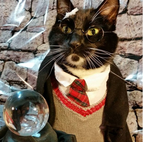 www.instagram.com/cat_cosplay/
