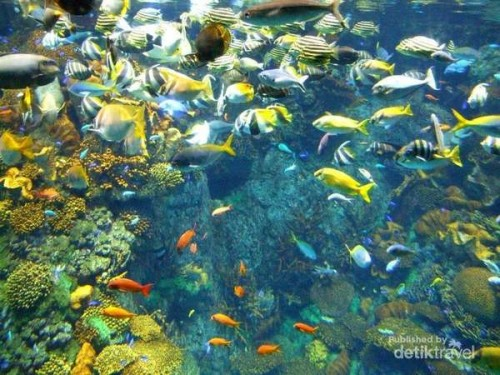 Warna-warni ikan perairan Great Barrier Reef