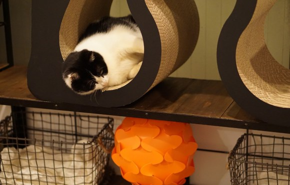 SAVE CAT CAFE, kafe penyelamat kucing-kucing di Osaka