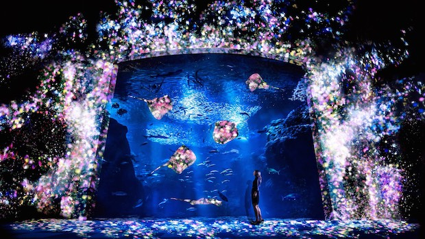 Wow! teamLab menciptakan akuarium interaktif, Night Wonder Aquarium 2015! (1)