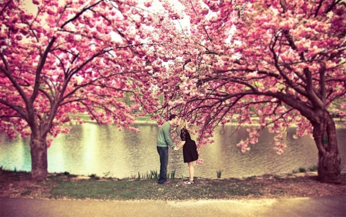 Foto: http://www.theonlinecentral.com/wp-content/uploads/2013/09/kiss-under-a-cherry-blossom-tree.jpg